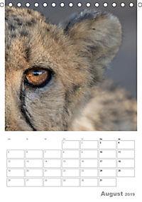 BIG CATS - Namibias Raubkatzen (Tischkalender 2019 DIN A5 hoch) - Produktdetailbild 8