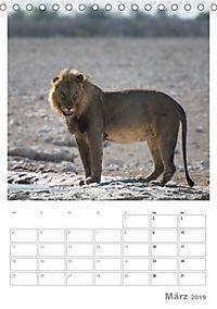 BIG CATS - Namibias Raubkatzen (Tischkalender 2019 DIN A5 hoch) - Produktdetailbild 3