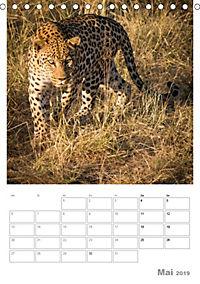 BIG CATS - Namibias Raubkatzen (Tischkalender 2019 DIN A5 hoch) - Produktdetailbild 5
