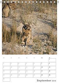 BIG CATS - Namibias Raubkatzen (Tischkalender 2019 DIN A5 hoch) - Produktdetailbild 9