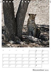 BIG CATS - Namibias Raubkatzen (Tischkalender 2019 DIN A5 hoch) - Produktdetailbild 11