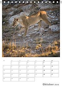 BIG CATS - Namibias Raubkatzen (Tischkalender 2019 DIN A5 hoch) - Produktdetailbild 10