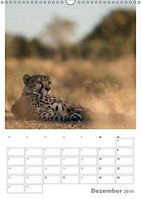 BIG CATS - Namibias Raubkatzen (Wandkalender 2019 DIN A3 hoch) - Produktdetailbild 12