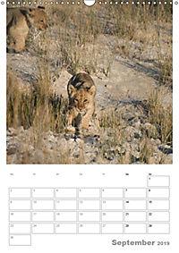BIG CATS - Namibias Raubkatzen (Wandkalender 2019 DIN A3 hoch) - Produktdetailbild 9
