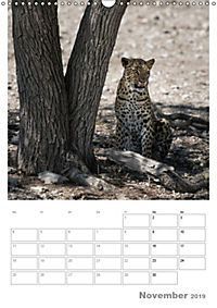 BIG CATS - Namibias Raubkatzen (Wandkalender 2019 DIN A3 hoch) - Produktdetailbild 11