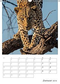 BIG CATS - Namibias Raubkatzen (Wandkalender 2019 DIN A3 hoch) - Produktdetailbild 1