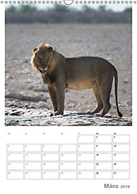 BIG CATS - Namibias Raubkatzen (Wandkalender 2019 DIN A3 hoch) - Produktdetailbild 3