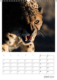 BIG CATS - Namibias Raubkatzen (Wandkalender 2019 DIN A3 hoch) - Produktdetailbild 6