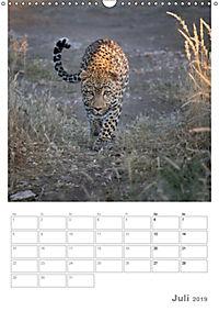 BIG CATS - Namibias Raubkatzen (Wandkalender 2019 DIN A3 hoch) - Produktdetailbild 7