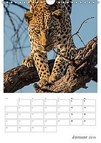BIG CATS - Namibias Raubkatzen (Wandkalender 2019 DIN A4 hoch) - Produktdetailbild 1