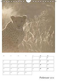 BIG CATS - Namibias Raubkatzen (Wandkalender 2019 DIN A4 hoch) - Produktdetailbild 2