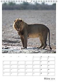 BIG CATS - Namibias Raubkatzen (Wandkalender 2019 DIN A4 hoch) - Produktdetailbild 3