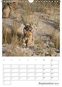 BIG CATS - Namibias Raubkatzen (Wandkalender 2019 DIN A4 hoch) - Produktdetailbild 9