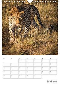 BIG CATS - Namibias Raubkatzen (Wandkalender 2019 DIN A4 hoch) - Produktdetailbild 5