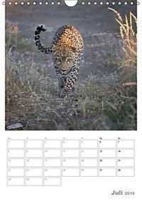 BIG CATS - Namibias Raubkatzen (Wandkalender 2019 DIN A4 hoch) - Produktdetailbild 7