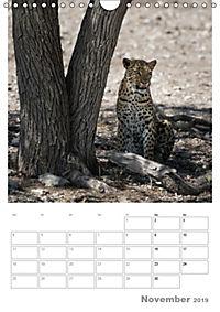 BIG CATS - Namibias Raubkatzen (Wandkalender 2019 DIN A4 hoch) - Produktdetailbild 11