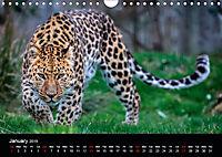 Big Catz (Wall Calendar 2019 DIN A4 Landscape) - Produktdetailbild 1