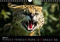 Big Catz (Wall Calendar 2019 DIN A4 Landscape) - Produktdetailbild 4