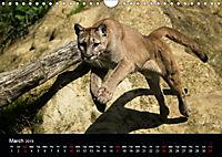 Big Catz (Wall Calendar 2019 DIN A4 Landscape) - Produktdetailbild 3