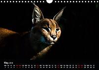 Big Catz (Wall Calendar 2019 DIN A4 Landscape) - Produktdetailbild 5