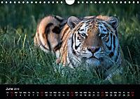 Big Catz (Wall Calendar 2019 DIN A4 Landscape) - Produktdetailbild 6
