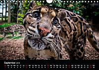 Big Catz (Wall Calendar 2019 DIN A4 Landscape) - Produktdetailbild 9