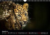 Big Catz (Wall Calendar 2019 DIN A4 Landscape) - Produktdetailbild 8