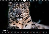 Big Catz (Wall Calendar 2019 DIN A4 Landscape) - Produktdetailbild 10