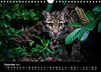 Big Catz (Wall Calendar 2019 DIN A4 Landscape) - Produktdetailbild 12