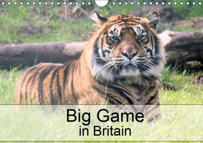 Big Game in Britain (Wall Calendar 2019 DIN A4 Landscape), Jon Grainge