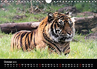 Big Game in Britain (Wall Calendar 2019 DIN A4 Landscape) - Produktdetailbild 10