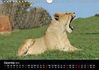 Big Game in Britain (Wall Calendar 2019 DIN A4 Landscape) - Produktdetailbild 12