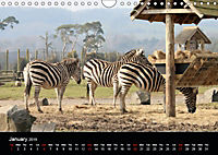 Big Game in Britain (Wall Calendar 2019 DIN A4 Landscape) - Produktdetailbild 1