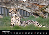 Big Game in Britain (Wall Calendar 2019 DIN A4 Landscape) - Produktdetailbild 9