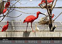 Birds found in Malta (Wall Calendar 2019 DIN A3 Landscape) - Produktdetailbild 7