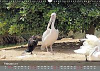 Birds found in Malta (Wall Calendar 2019 DIN A3 Landscape) - Produktdetailbild 2