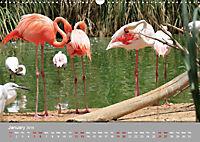 Birds found in Malta (Wall Calendar 2019 DIN A3 Landscape) - Produktdetailbild 1