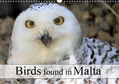 Birds found in Malta (Wall Calendar 2019 DIN A3 Landscape), Jon Grainge