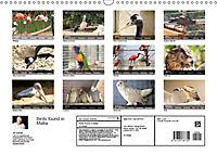 Birds found in Malta (Wall Calendar 2019 DIN A3 Landscape) - Produktdetailbild 13