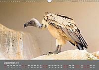 Birds found in Malta (Wall Calendar 2019 DIN A3 Landscape) - Produktdetailbild 12