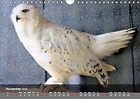 Birds found in Malta (Wall Calendar 2019 DIN A4 Landscape) - Produktdetailbild 11