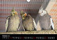 Birds found in Malta (Wall Calendar 2019 DIN A4 Landscape) - Produktdetailbild 10