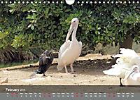 Birds found in Malta (Wall Calendar 2019 DIN A4 Landscape) - Produktdetailbild 2