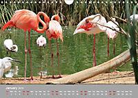 Birds found in Malta (Wall Calendar 2019 DIN A4 Landscape) - Produktdetailbild 1