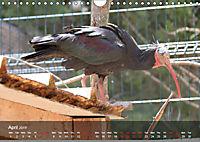 Birds found in Malta (Wall Calendar 2019 DIN A4 Landscape) - Produktdetailbild 4
