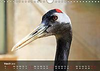 Birds found in Malta (Wall Calendar 2019 DIN A4 Landscape) - Produktdetailbild 3