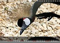 Birds found in Malta (Wall Calendar 2019 DIN A4 Landscape) - Produktdetailbild 5