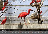 Birds found in Malta (Wall Calendar 2019 DIN A4 Landscape) - Produktdetailbild 7