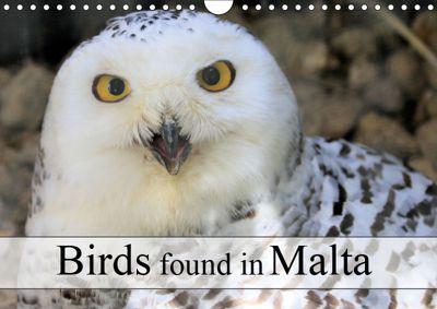 Birds found in Malta (Wall Calendar 2019 DIN A4 Landscape), Jon Grainge