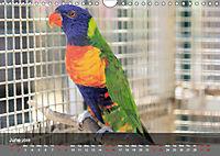 Birds found in Malta (Wall Calendar 2019 DIN A4 Landscape) - Produktdetailbild 6